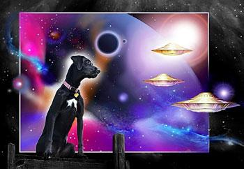 Shasta-space-dog-08-14